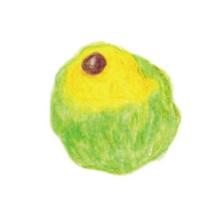 毎日が和菓子日和 | 後藤 | ほたる(季節の上生菓子)