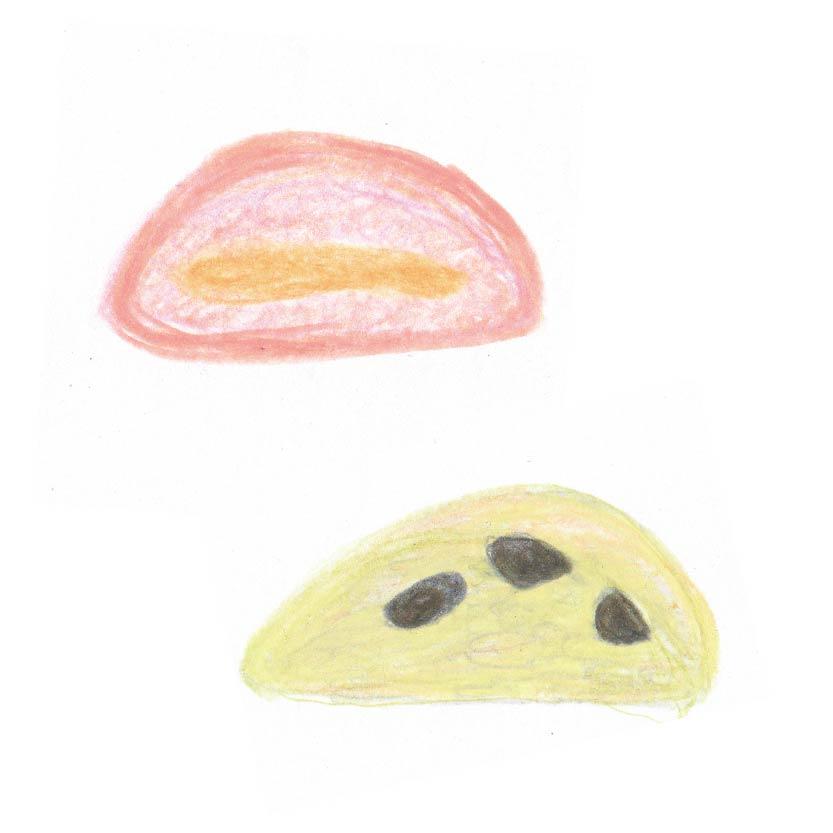 毎日が和菓子日和 | 労研饅頭たけうち | 労研饅頭(断面イメージ)