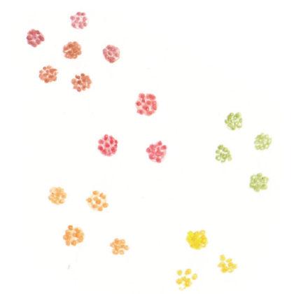 毎日が和菓子日和 | 緑寿庵清水 | 金平糖