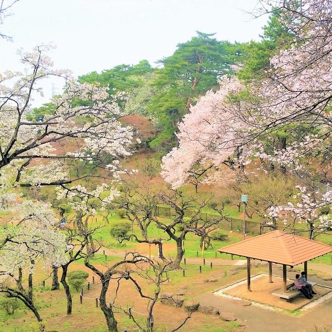 毎日が和菓子日和   大倉山公園